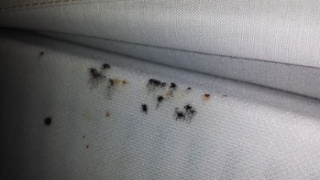 How To Check For Bedbugs Knowbedbugs